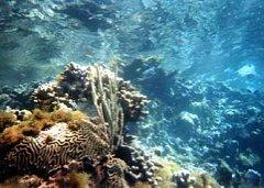 Evans Coral
